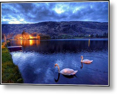 Swans At Gougane Barra Metal Print