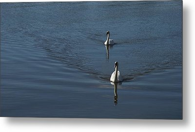 Swans On Blue Metal Print by Charles Kraus