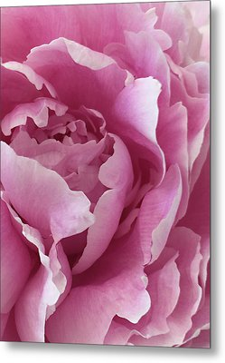 Sweet As Cotton Candy Metal Print by Sherry Hallemeier