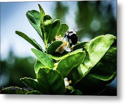 Sweet Bee Metal Print