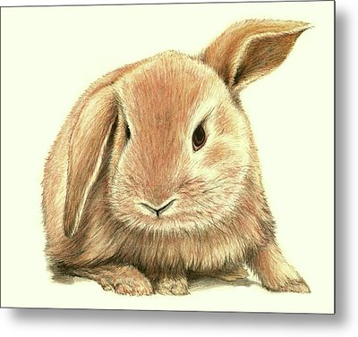 Metal Print featuring the drawing Sweet Bunny by Heidi Kriel