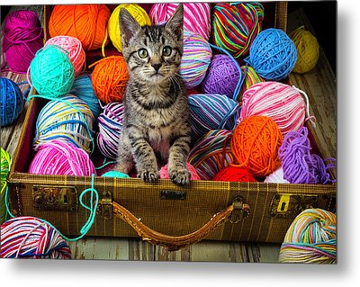 Sweet Kitten In Suitcase Metal Print