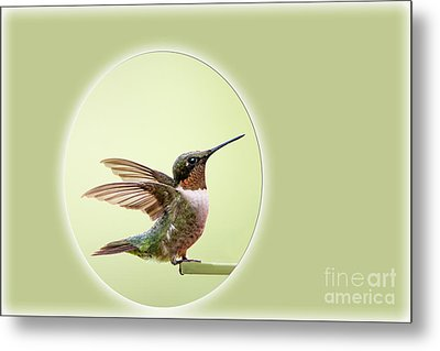 Metal Print featuring the photograph Sweet Little Hummingbird by Bonnie Barry