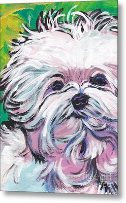 Sweet Maltese  Metal Print by Lea S