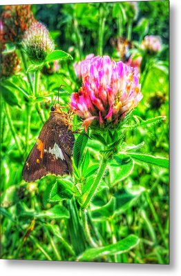 Metal Print featuring the photograph Sweet Nectar  by Jame Hayes