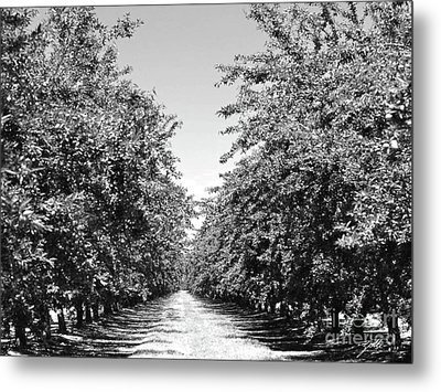 Sweet Path Metal Print