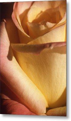 Sweet Rose Metal Print