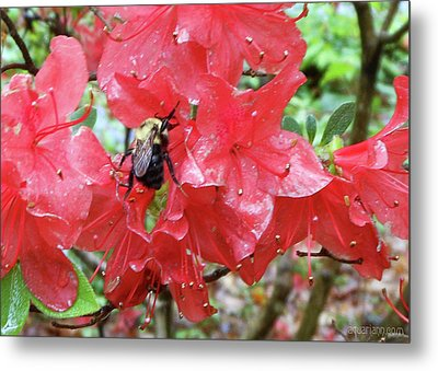 Sweet To Be An Azalea Tree Metal Print