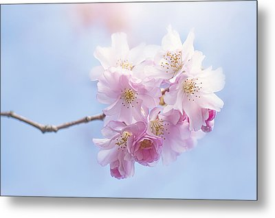Sweetness Metal Print by Jacky Parker