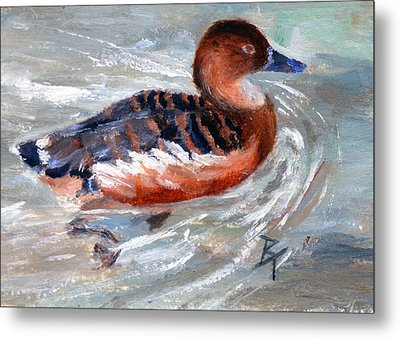 Swimming Aceo Metal Print by Brenda Thour