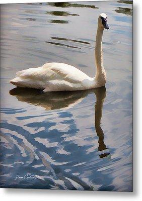 Swimming Swan Metal Print by Joann Copeland-Paul