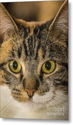 Symmetrical Cat Metal Print