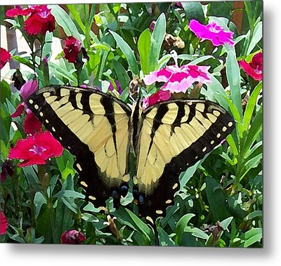 Metal Print featuring the photograph Symmetry by Sandi OReilly