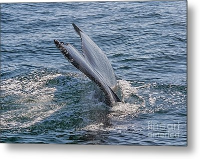 Tail Fin Of A Big Whale Metal Print
