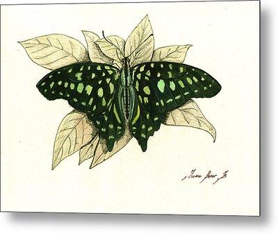 Tailed Jay Butterfly Metal Print by Juan Bosco