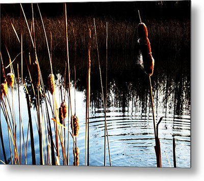 Tails Of Silver And Gold Metal Print by Toni Jackson