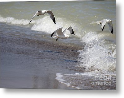 Take Flight Metal Print by Jeannie Burleson