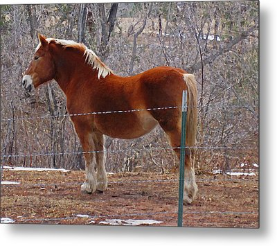 Metal Print featuring the photograph Take My Picture by Tammy Sutherland
