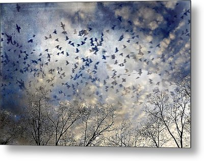 Metal Print featuring the photograph Taken Flight by Jan Amiss Photography