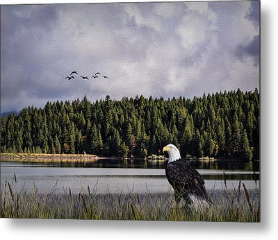 Metal Print featuring the photograph Taking A Break As Evening Falls by Diane Schuster