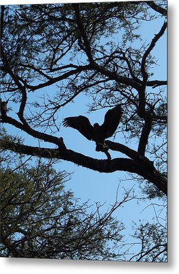 Taking Flight South Africa Metal Print by Patrick Murphy