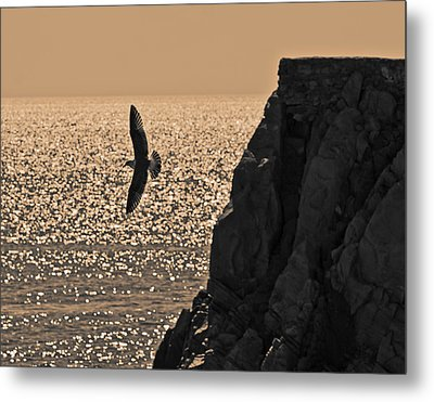 Taking Off Metal Print by Ron Dubin