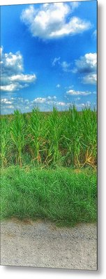 Tall Corn Metal Print
