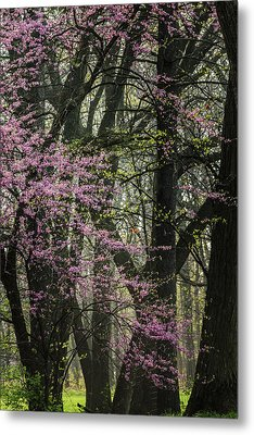 Tall Red Buds In Spring Metal Print by Joni Eskridge