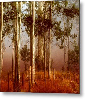 Tall Timbers Metal Print by Holly Kempe