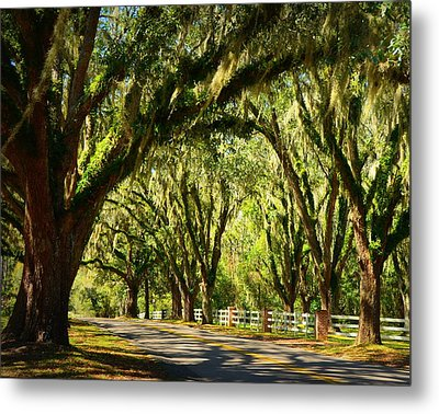Tallahassee Canopy Road Metal Print by Carla Parris