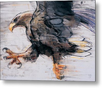 Talons   White Tailed Sea Eagle Metal Print by Mark Adlington
