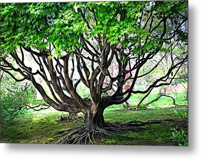 tangled Branches Metal Print by Marty Koch