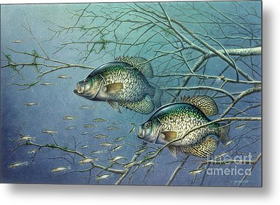Tangled Cover Crappie II Metal Print