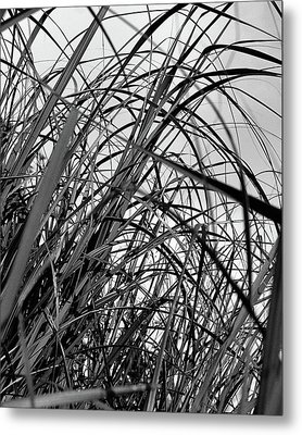 Metal Print featuring the photograph Tangled Grass by Susan Capuano