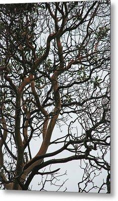 Tangled Web Tree Metal Print by Carol  Eliassen