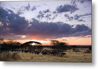 Tarangire Sunset Metal Print by Adam Romanowicz