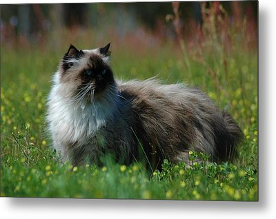 Metal Print featuring the photograph Taste Of Freedom by Lori Mellen-Pagliaro