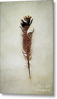 Metal Print featuring the photograph Tattered Turkey Feather by Stephanie Frey