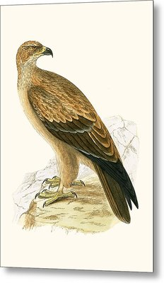 Tawny Eagle Metal Print by English School