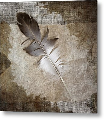 Tea Feather Metal Print by Carol Leigh