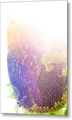 Metal Print featuring the photograph Technicolor Sunflower by Christi Kraft