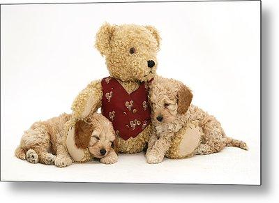Teddy Bear With Puppies Metal Print by Jane Burton