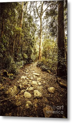 Temperate Mountain Trail Metal Print by Jorgo Photography - Wall Art Gallery