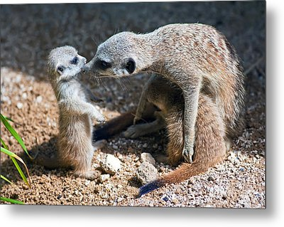 Tender Care Metal Print