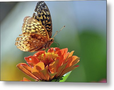 Metal Print featuring the photograph Tenderness by Glenn Gordon