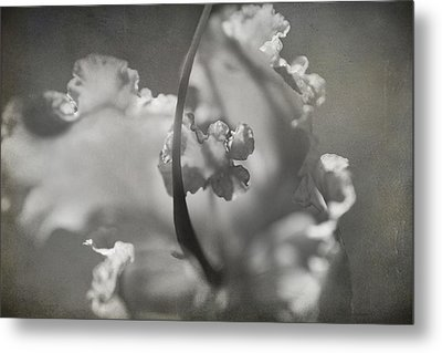 Tenderness Metal Print by Laurie Search
