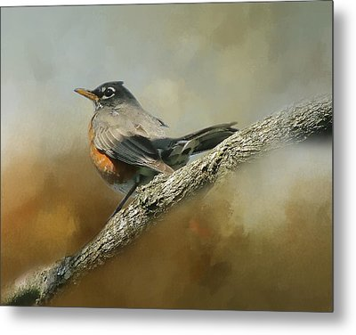 Teressia's Spring Robin  Metal Print by TnBackroadsPhotos