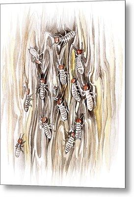 Termites Metal Print