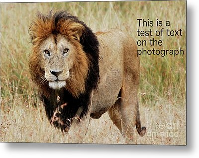 Test Of Text Metal Print by Alan Clifford
