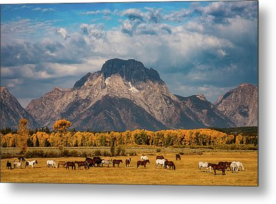 Teton Horse Ranch Metal Print by Darren White